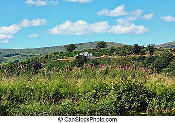 Summer landscape in Scotland