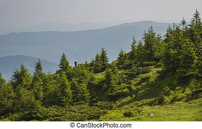 Summer landscape in the Carpathian mountains