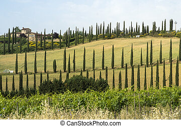 Summer landscape in the Chianti region near Poggibonsi, Siena, Tuscany, Italy. Farm and cypresses