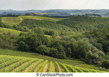 Summer landscape in the Chianti region near Poggibonsi, Siena, Tuscany, Italy. Vineyards