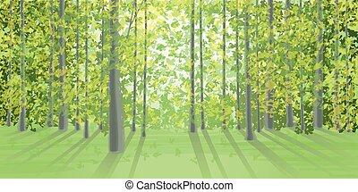 Summer landscape in the dense forest