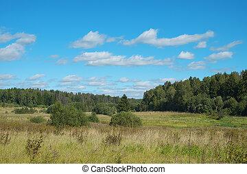 Summer landscape in the natural park