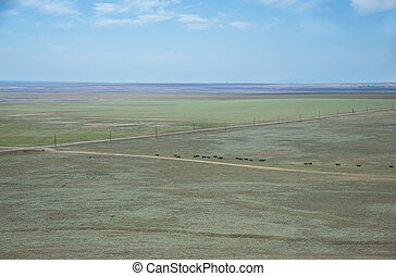 Summer landscape in the steppe Crimea