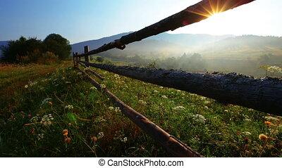 summer landscape - morning