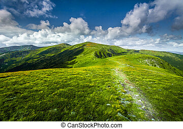 summer landscape. mountain path through the field.