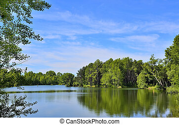 Summer landscape near the lake