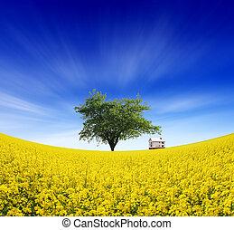 farm fields - summer landscape of farm fields and the ...