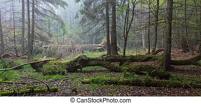 Summer landscape of old forest and broken tree