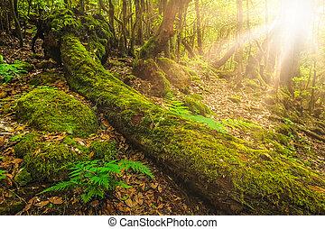 Summer landscape of the Garajonay national park