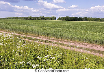 Summer landscape on a clear Sunny day.
