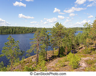 summer landscape on a forest lake