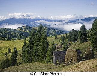 summer landscape on mountain