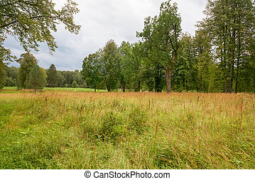 Summer landscape. Overgrown meadow in the forest on a summer day