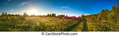 landscape panorama with the blossoming meadow, sunrise