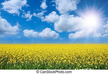 summer landscape - Summer landscape rape filed and perfect...