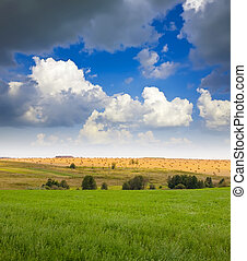 Summer landscape with field under cloudy sky