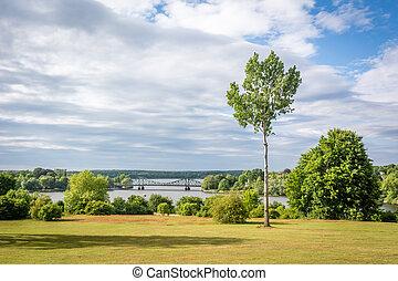 Summer Landscape. Small tree photo