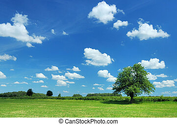 Summer Landscape - Meadow and tree