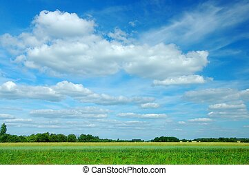 Summer Landscape - Green meadow and blue sky