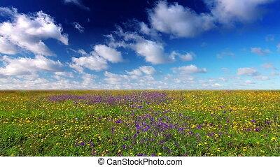 summer landscape - field, flowers, grass, hill, landscape,...