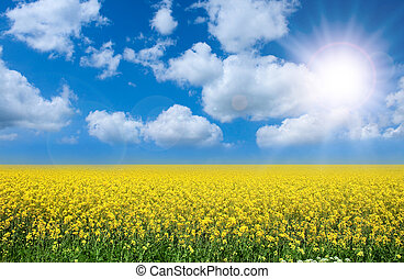 summer landscape - Summer landscape rape filed and perfect ...