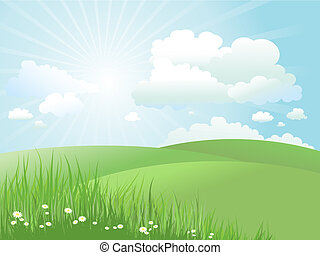 summer landscape - Summer landscape with daisies in grass