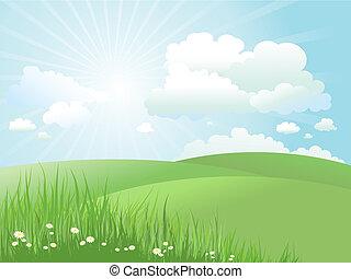 summer landscape - Summer landscape with daisies in grass