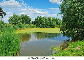 Summer Landscape - Summer rural landscape