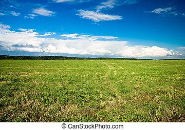 Summer landscape   Sunny field
