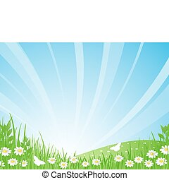 Sunrise. Green meadow, daisies and butterflies on the background of a beautiful summer landscape. Vector illustration.