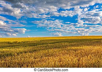 Summer landscape Vysocina Czech Republic - Hot summer day in...