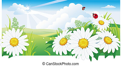 Summer landscape with a chamomile.