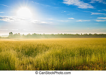 summer landscape with a field, sunrise and fog