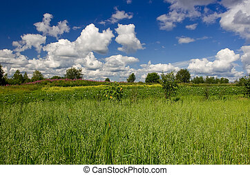 Summer landscape with beautiful clouds