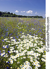 summer landscape with beautiful wild flowers