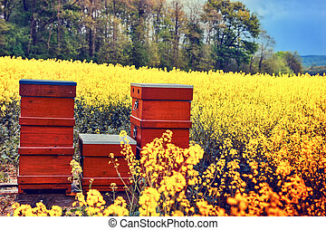 Summer landscape with beehives in a field