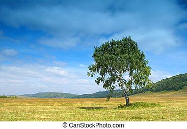 Summer landscape with birch