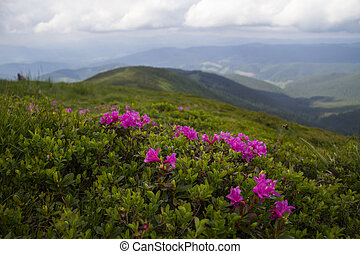Summer landscape with blooming rhododendron