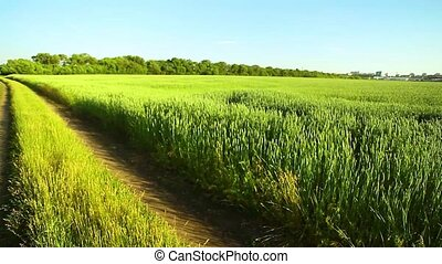 Summer landscape with country road and field of Soy, Corn FieldDirt road in a field.