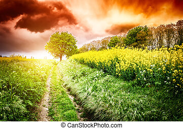 Summer landscape with country road at sunset