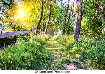 Summer landscape with country road