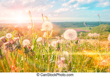 Summer landscape with white dandelions. Nature background