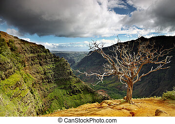 Summer landscape with dead tree in the foreground at Waimea...