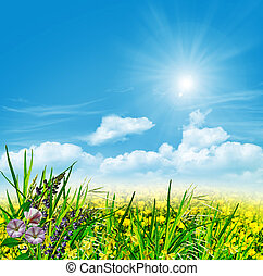 Summer landscape with field flowers on a background of blue sky