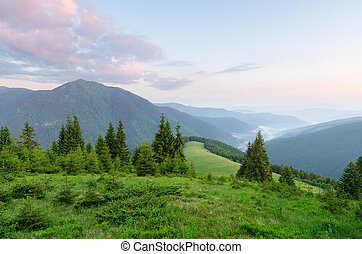 Summer landscape with fir forest in mountains