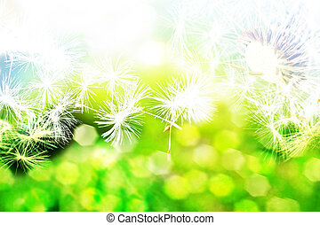 summer landscape with flowers dandelions