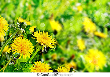 summer landscape with flowers dandelions