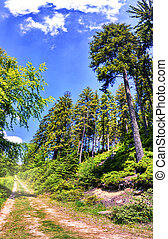 Summer landscape with forest road