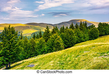 summer landscape with forested hills. beautiful scenery of...