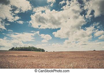Summer landscape with golden grain